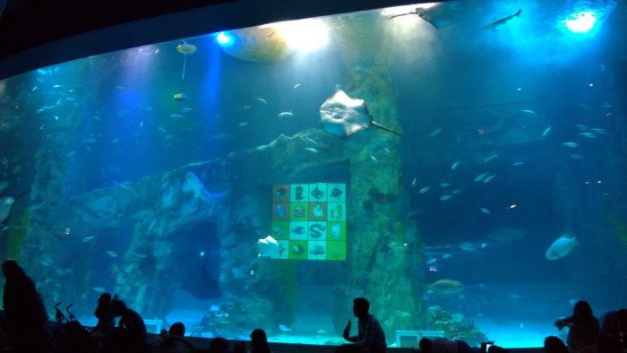 大水槽は沖縄の美ら海水族館