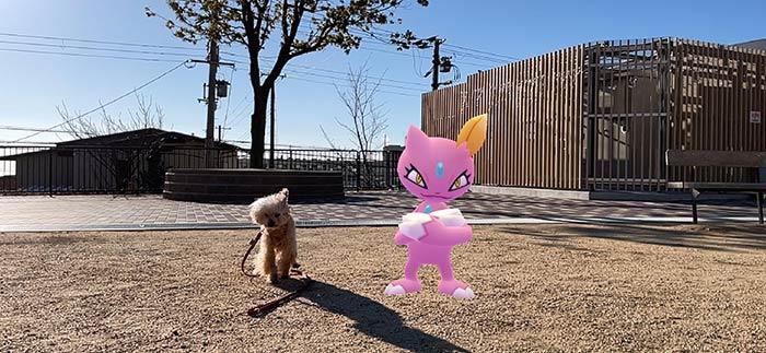 愛犬との散歩 ポケモンGO